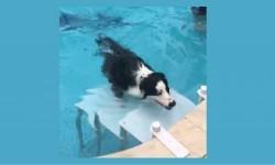 escada de piscina para pet Actual com dog
